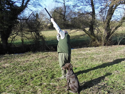 Uggeshall Gundogs - Fully Trained Dogs
